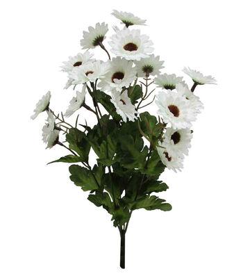 Blooming Autumn Daisy Bush-White