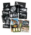 Roylco Animal X-Ray Set of 14