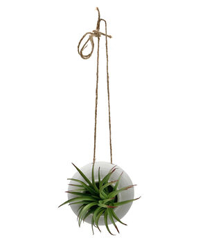 Fresh Picked Spring Desert Aura Hanging Planter with Succulents