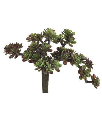 "5"" Sedum Pick-Green/Burgundy"