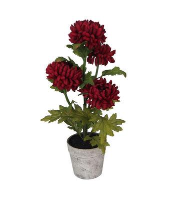 Blooming Autumn Mum in Paper Pot-Burgundy