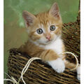 Novelty Cotton Fabric Panel 44\u0022-Kittens In The Basket
