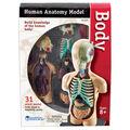 Human Body Anatomy Model, 31 Pieces