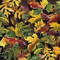 Harvest Cotton Fabric-Chocolate Maple Leaves