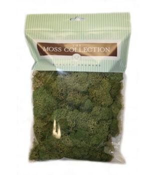 Reindeer Moss Basil