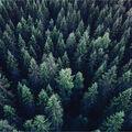 Heidi Swapp Wolf Pack Double Sided Cardstock-Pine Trees & Diamonds