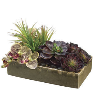Bloom Room Luxe 8'' Echeveria, Phalaenopsis Orchid & Yucca-Burgundy