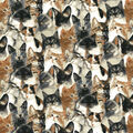 Novelty Cotton Fabric-Photoreal Cats