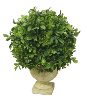 Bloom Room 11'' Potted Boxwood