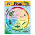 Life Cycle of a Frog Learning Chart 17\u0022x22\u0022 6pk