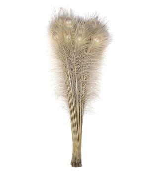 Peacock Feather Eye-Iris