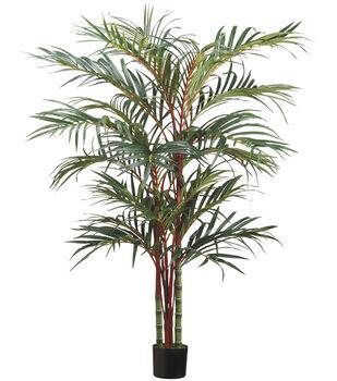 Lipstick Palm in Pot 6'