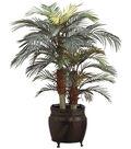 4\u0027 Phoenix Palm in Round Pot