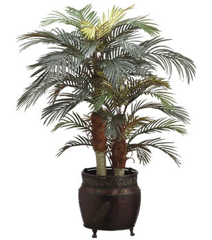 Phoenix Palm in Round Pot 4'-Green