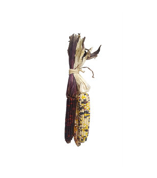 Blooming Autumn Indian Corns-Multi