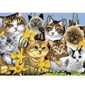 15-1/4\u0022x11-1/4\u0022 Junior Paint By Number Kit-Cats Montage
