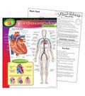 The Human Body–Cardiovascular System Learning Chart 17\u0022x22\u0022 6pk