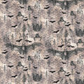Hallowen Cotton Fabric-Bats And Skeletons