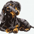 Dachshund Counted Cross Stitch Kit 15 Count