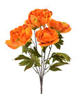 Blooming Autumn Peony Bush-Orange