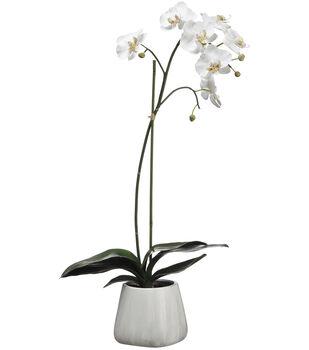 Phalaenopsis Orchid Plant in Terracotta Pot 30''-White