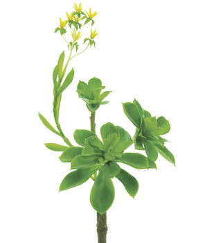 Bloom Room 9'' Flowering Echeveria Pick
