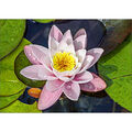Collection D\u0027Art Diamond Embroidery/Printed/Gem Kit 27X38cm-Magic Lotus