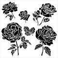 Crafter\u0027s Workshop Cabbage Roses Template 6\u0027\u0027x6\u0027\u0027