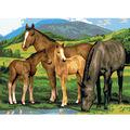 15-1/4\u0022x11-1/4\u0022 Junior Paint By Number Kit-Horse & Foals