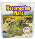 Fast-Acting Plants-Resurrection Plant