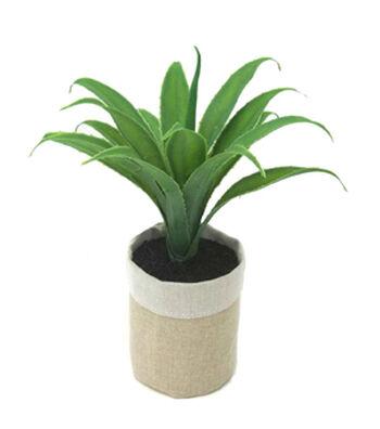 Hello Spring Short Succulent in Grow Bag