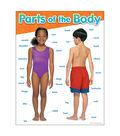 Parts of the Body Learning Chart 17\u0022x22\u0022 6pk