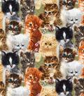 Novelty Cotton Fabric-Kitty Piles