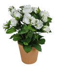 Fresh Picked Spring 11\u0027\u0027 Potted Roses-White
