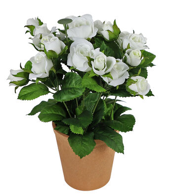 Fresh Picked Spring 11'' Potted Roses-White