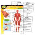 The Human Body–Muscular System Learning Chart 17\u0022x22\u0022 6pk