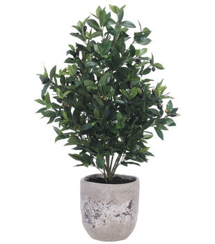 Olive Tree in Cement Planter 45''