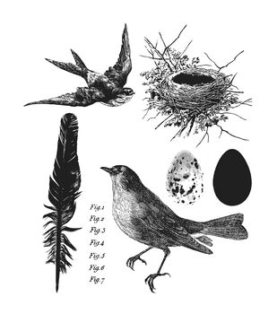 Stampers Anonymous Cling Rubber Stamp Set Bird Feather