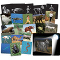 Roylco What's Inside Animals Cards