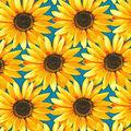 Harvest Cotton Fabric-Sunflower Meadow Blue