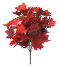 Blooming Autumn Maple Leaves Bush-Burgundy