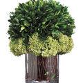 Preserved Boxwood in Glass Vase 11\u0027\u0027-Green