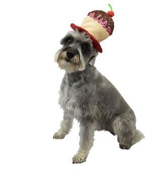 Maker's Halloween Pet Accessory-Cupcake Hat Small/Medium
