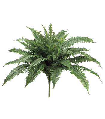 Bloom Room 24.5'' Boston Fern Bush