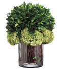 Preserved Boxwood in Glass Vase 11\u0027\u0027-Green