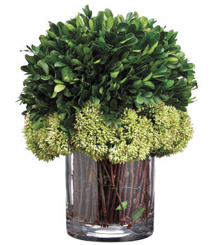Preserved Boxwood in Glass Vase 11''-Green