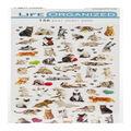 Life Organized 156 pk Micro Stickers-Cats
