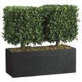 Boxwood Topiary in Rectangular Bamboo Container 24\u0027\u0027-Green