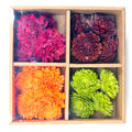 Blooming Autumn Mixed Dried Sola in Box