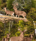 Anti-Pill Fleece Fabric 59\u0022-Wild Deer